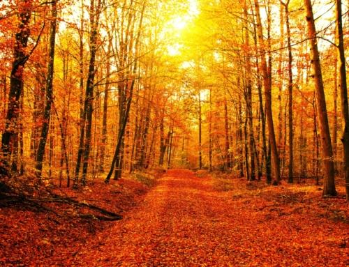 Calendario Ottobre – Novembre – inizio Dicembre Reparto Stura